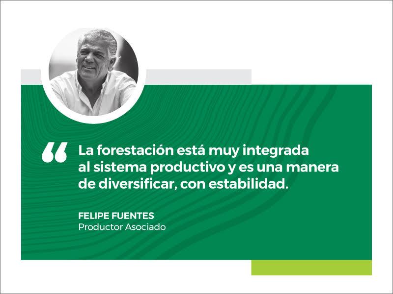 Exitosa integración de la forestación con ganadería